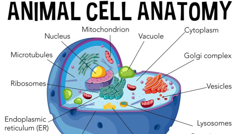【東京大学】高校生と大学生のための金曜特別講座 「生物細胞の形は何が決める? 物理学からの答え」